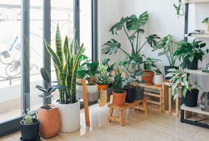 Dicas para decoração de apartamento pequeno - Jardim