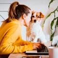 Descubra como organizar uma rotina de home office